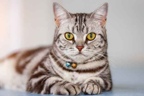پتریزو | فروشگاه اینترنتی گربه|آرایشگاه حیوانات|بهترین فروشگاه گربه|فروش گربه -بریتیش-مو-کوتاه آموزش ها و مقالات