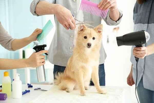 پتریزو | فروشگاه اینترنتی گربه|آرایشگاه حیوانات|بهترین فروشگاه گربه|فروش گربه -ارایشگری-سگ آموزش ها و مقالات