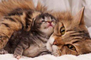 پتریزو | فروشگاه اینترنتی گربه|آرایشگاه حیوانات|بهترین فروشگاه گربه|فروش گربه -تغذیه-بچه-گربه-از-شیر-مادر-300x200 فواید تغذیه بچه گربه با شیر مادر تغذیه و رژیم غذایی گربه ها سلامتی و بهداشت گربه ها نگهداری و آشنایی با گربه ها تغذیه گربه های لاغر تغذیه گربه های چاق تغذیه شیر مادر گربه تعادل در تغذیه بچه گربه