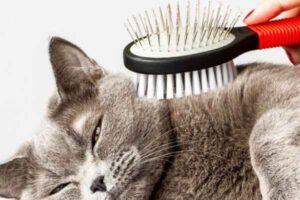 پتریزو | فروشگاه اینترنتی گربه|آرایشگاه حیوانات|بهترین فروشگاه گربه|فروش گربه -شانه-زدن-مو-گربه-300x200 شانه کردن و برس کشیدن موهای گربه و فواید آن آموزش گربه ها ارایشگاه حیوانات ارایشگاه گربه راهنمای نژاد های گربه ها گربه نظافت حیوانات خانگی نگهداری و آشنایی با گربه ها هزینه های نگهداری گربه نگهداری گربه پرشین ماده نگهداری گربه نگهداری از گربه خانگی شانه مو گربه درس گرفتن از اشتباهات دیگران در زمینه نگهداری گربه اراستگی گربه