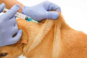 پتریزو | فروشگاه اینترنتی گربه|آرایشگاه حیوانات|بهترین فروشگاه گربه|فروش گربه -سگ-300x200 آیا بیماری سگ های دیابتی بدون تزریق انسولین قابل درمان هستند؟ راهنمای نژاد های سگ ها سلامتی و بهداشت سگ ها نگهداری و آشنایی با سگ ها زمان تزریق واکسن ها روش تزریق انسولین به سگ دیابت سگ تزریق انسولین تزریق امپول به سگ