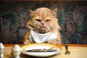 پتریزو | فروشگاه اینترنتی گربه|آرایشگاه حیوانات|بهترین فروشگاه گربه|فروش گربه -گربه-ما-همیشه-گرسنه-است-300x200 چرا گربه من همیشه گرسنه است ؟ تغذیه و رژیم غذایی گربه ها راهنمای نژاد های گربه ها سلامتی و بهداشت گربه ها گواهی سلامت گربه گرسنگی گربه تغذیه مناسب برای گربه تغذیه گربه های لاغر تغذیه گربه های چاق تغذیه شیر مادر گربه