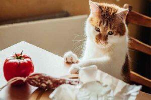 پتریزو | فروشگاه اینترنتی گربه|آرایشگاه حیوانات|بهترین فروشگاه گربه|فروش گربه -گربه-من-همیشه-گرسنه-است-300x200 چقدر باید به گربه خود غذا بدهم؟ اصول اولیه تغذیه و رژیم غذایی گربه ها راهنمای نژاد های گربه ها سلامتی و بهداشت گربه ها گربه تغذیه مناسب برای گربه تغذیه گربه های لاغر تغذیه گربه های چاق تغذیه گربه رگدال تغذیه شیر مادر گربه تعادل در تغذیه بچه گربه