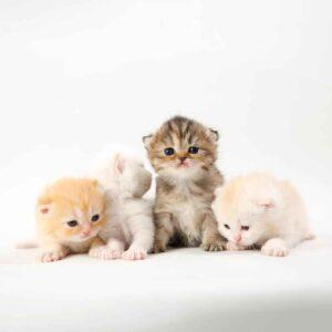 پتریزو | فروشگاه اینترنتی گربه|آرایشگاه حیوانات|بهترین فروشگاه گربه|فروش گربه WhatsApp-Image-2021-04-08-at-19.25.53-300x300 صفحه اصلی